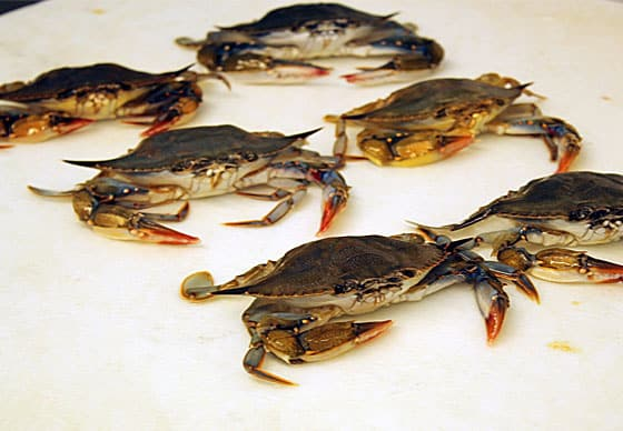 Six live soft shell crabs on a white surface.