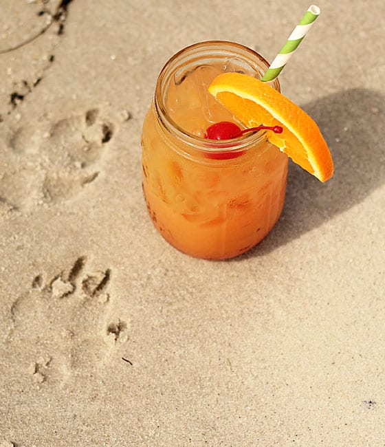 Overhead view of an orange cocktail in beach sand. Dog paw prints are in the sand.
