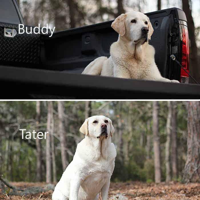 Buddy & Tater